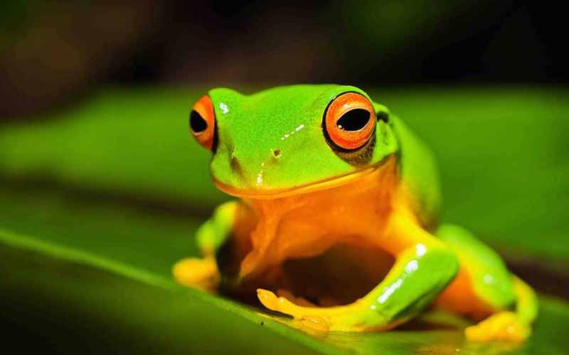 http://eastcoastbushregeneration.com/wp-content/uploads/2012/08/Frog.jpg