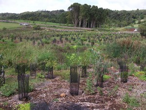 East Coast Bush Regeneration - Ecological Restoration