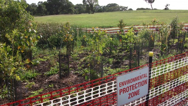 http://eastcoastbushregeneration.com/wp-content/uploads/2015/04/Planting-628x353.jpg